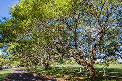 Trees Wide Spread Expanse Road Stock Image