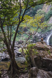 Trees and Wild Monkey in Khlong Lan Waterfall at Khampang Phet Province, Thailand Royalty Free Stock Images