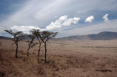 Trees in the Wilderness. Of the Serengati in Tanzania Royalty Free Stock Photo