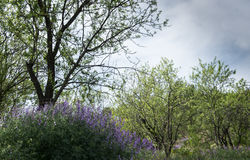 Trees and wildflower plants Stock Photography