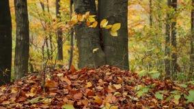 Trees on the wind, Autumn Season. Trees on the wind in autumn stock video footage