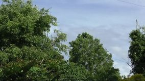 Trees in the wind - time lapse. Time lapse of trees and bushes blowing in the wind on a blustery day against blue sky and white clouds stock footage