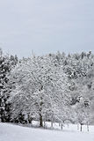 Trees in Winter. This image shows snow-capped trees with fence stock image