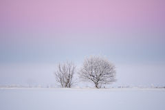 Trees in winter. A pair of trees in winter with snow on the ground Royalty Free Stock Images