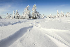Trees in winter. And snow country Royalty Free Stock Image