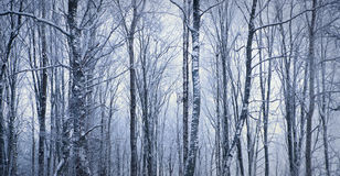 Trees in winter Stock Images