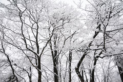 Trees in winter. At mt. emei Royalty Free Stock Images