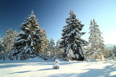 Trees and winter Royalty Free Stock Photo
