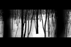 Trees in Winter. Stems and snow stock photo