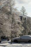 trees winter Στοκ Εικόνες