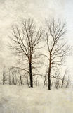 Trees with bare branches Stock Photos
