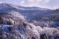 Trees in Winter in the Black Forest, Germany. Trees in the Black Forest, Germany, covered in snow during winter Royalty Free Stock Photo