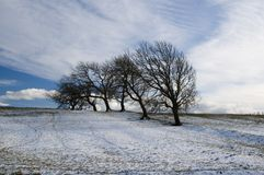 Trees in winter with clouds Royalty Free Stock Photos