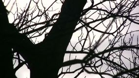 Trees. Winter trees with clouds behind stock footage