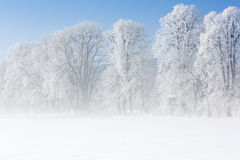 Trees in winter covered with hoarfrost Royalty Free Stock Images