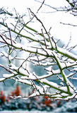 Trees in winter covered in snow Stock Images