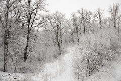 Trees in the winter Stock Photography