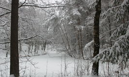 Trees in the winter covered with snow Stock Images