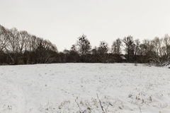 Trees in winter, day Stock Photography