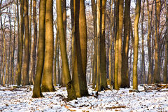 Trees in winter Royalty Free Stock Image