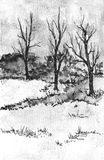 Trees in winter drawing. Royalty Free Stock Photography