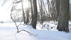Trees winter dry forest snow twig sunlight, landscape nature frozen the river stock video footage