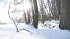 Trees winter dry forest twig sunlight snow, landscape nature frozen the river stock video footage
