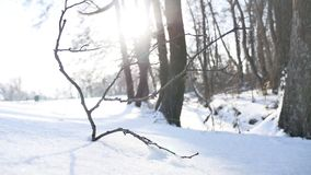 Trees winter dry twig sunlight forest snow, landscape nature frozen the river. Trees winter dry twig sunlight forest snow, landscape nature frozen river stock video footage