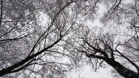 Trees in winter. And falling snow from the sky stock video