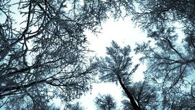 Trees in winter. And falling snow from the sky stock footage