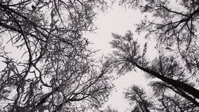 Trees in winter stock footage