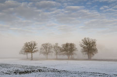 Trees in winter field royalty free stock photos