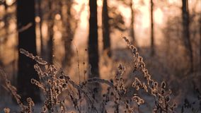 Trees in the winter forest landscape. Trees in the winter forest landscape stock video footage