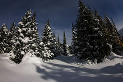Trees in winter forest in the moonlight under the stars Royalty Free Stock Photography