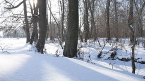 Trees winter forest snow, nature landscape frozen river stock footage