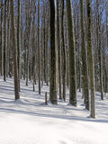 Trees in winter forest Stock Photos