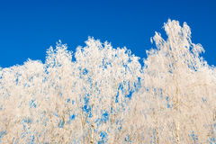Trees in winter frost Royalty Free Stock Photo