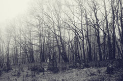 Trees in winter with frost on the ground Royalty Free Stock Image