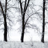 Trees in winter Stock Image