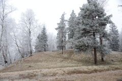 Trees in the winter Royalty Free Stock Photos