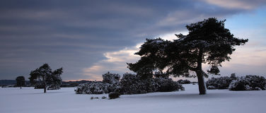 Trees in Winter landscape Stock Image