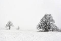 Trees in winter landscape Royalty Free Stock Images