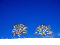 Trees in winter landscape (4) Royalty Free Stock Photo