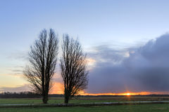 Trees in a winter landscape at sunrise Stock Images