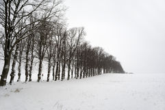 Trees at winter Stock Photos