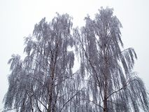 Trees in the winter nature background image Stock Photography