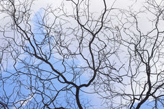 Trees in Winter. No leafs Stock Photos