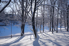 Trees in winter park. City park in the winter and trees rejecting long shadows Royalty Free Stock Photo