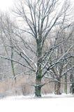 Trees in winter park Stock Photos