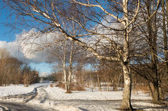 Trees in winter in a park and the road. 2016 stock photo